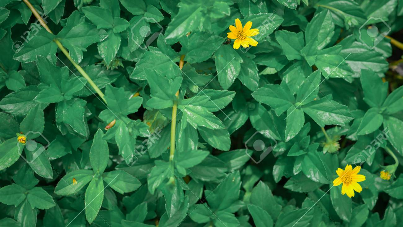 Image Of Real Green Leaves With Small Flowers Green Leaf Background Stock Photo Picture And Royalty Free Image Image 86945195