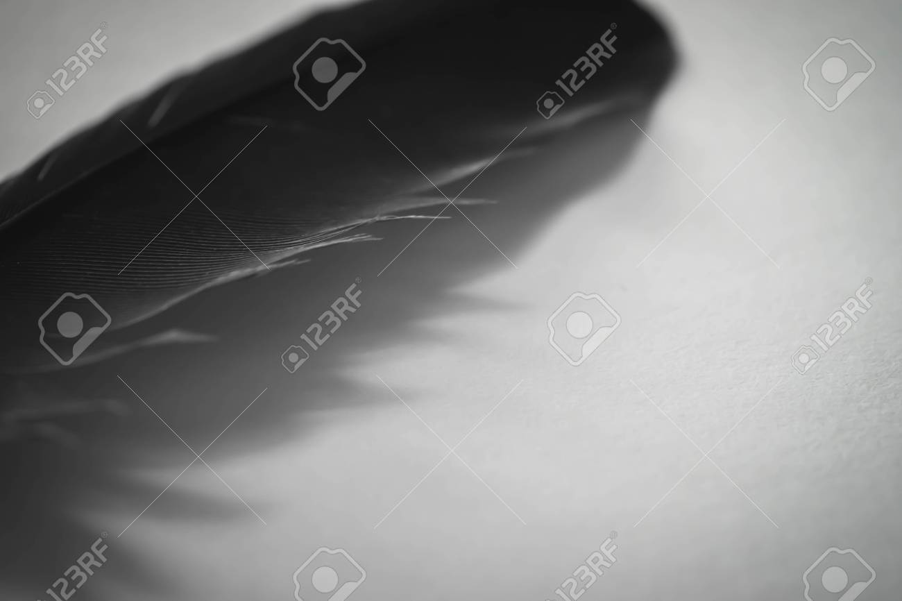 Close up elegant and classy black feather texture of bird with shadow and white background