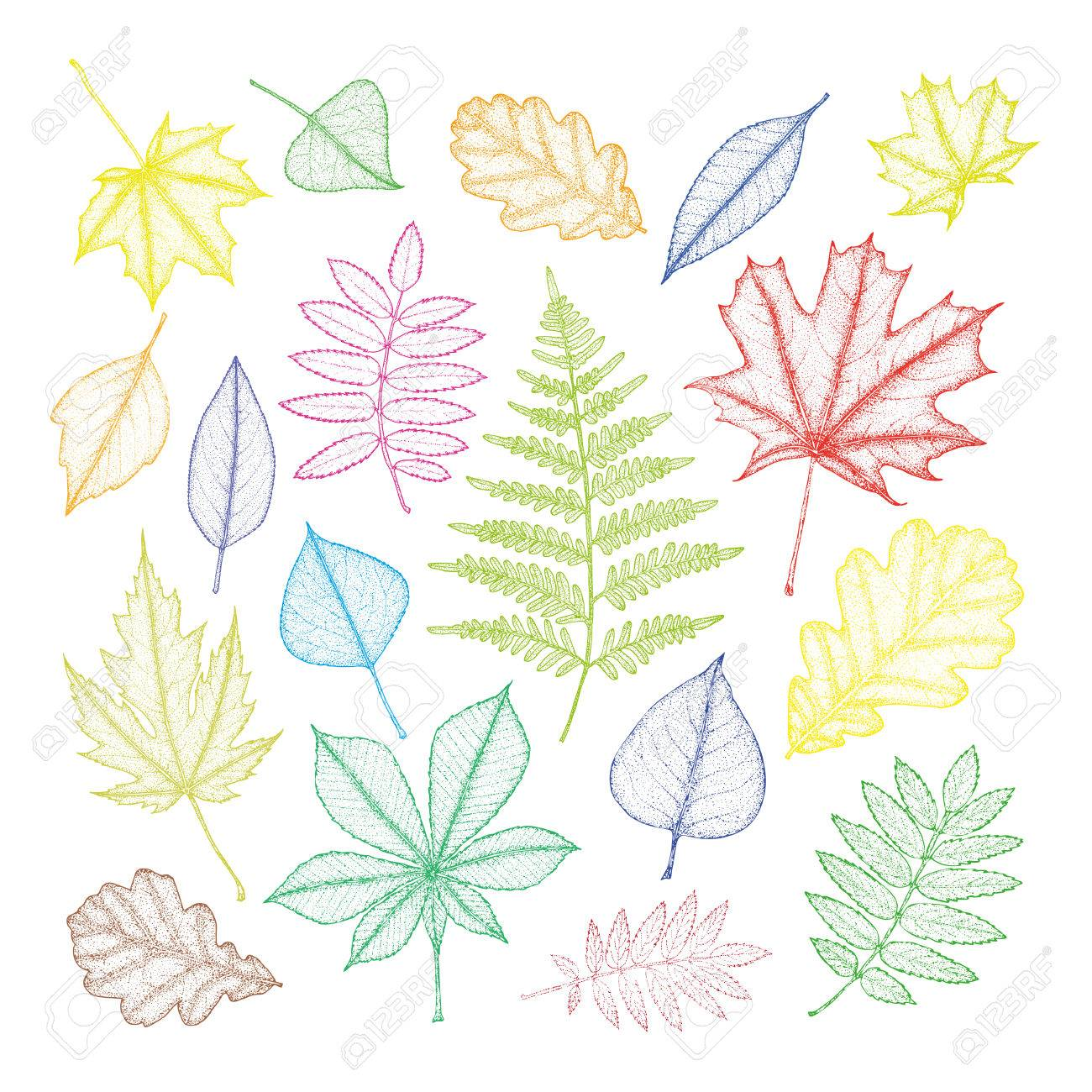 Gran Conjunto De Hojas Multicolores De Diferentes árboles Dibujo A