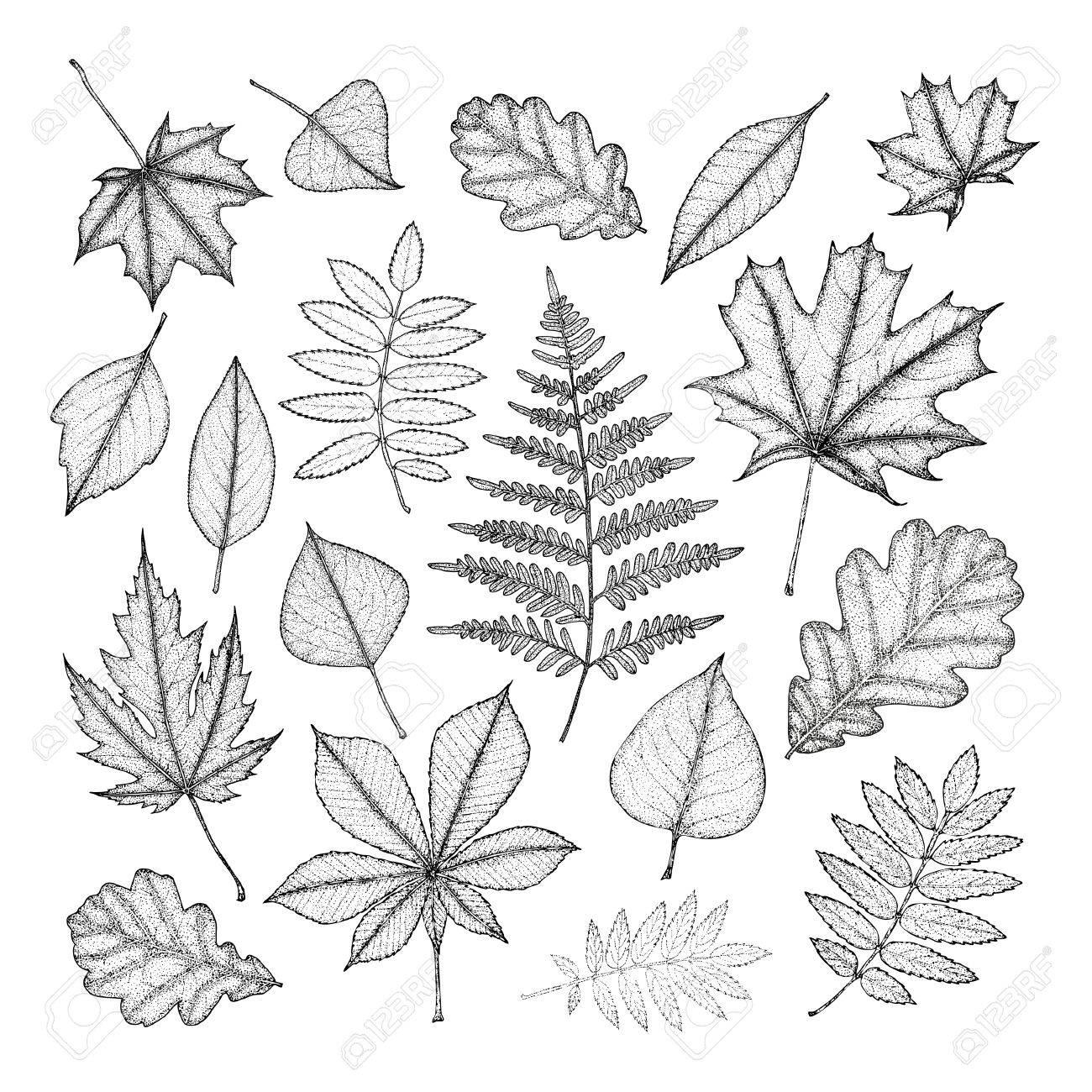 Gran Conjunto De Hojas De Varios árboles Dibujo A Mano