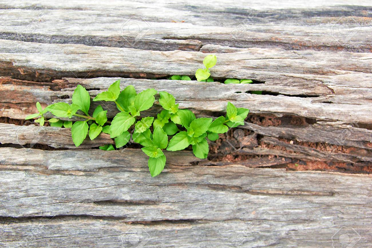 planta del arbol de la vida