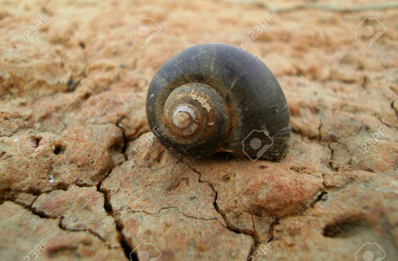 Snail shell on dry earth Stock Photo - 10750765