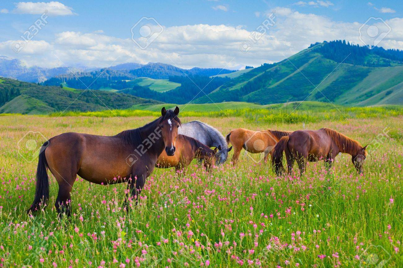 The herd of horses is grazed on a summer green meadow - 8529494
