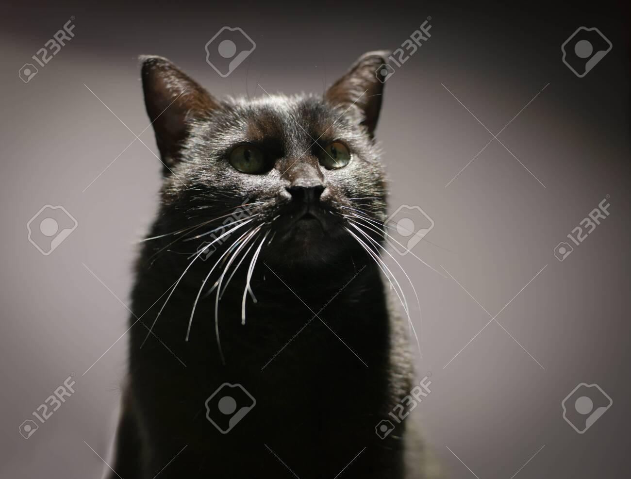 Cat portrait with a faithful stupid look. - 129404710