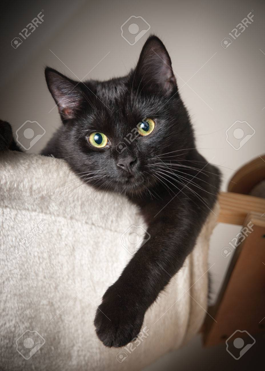 Beautiful Black Cat On The Top Of A Cloth Stock Photo Picture And Royalty Free Image Image 32805532