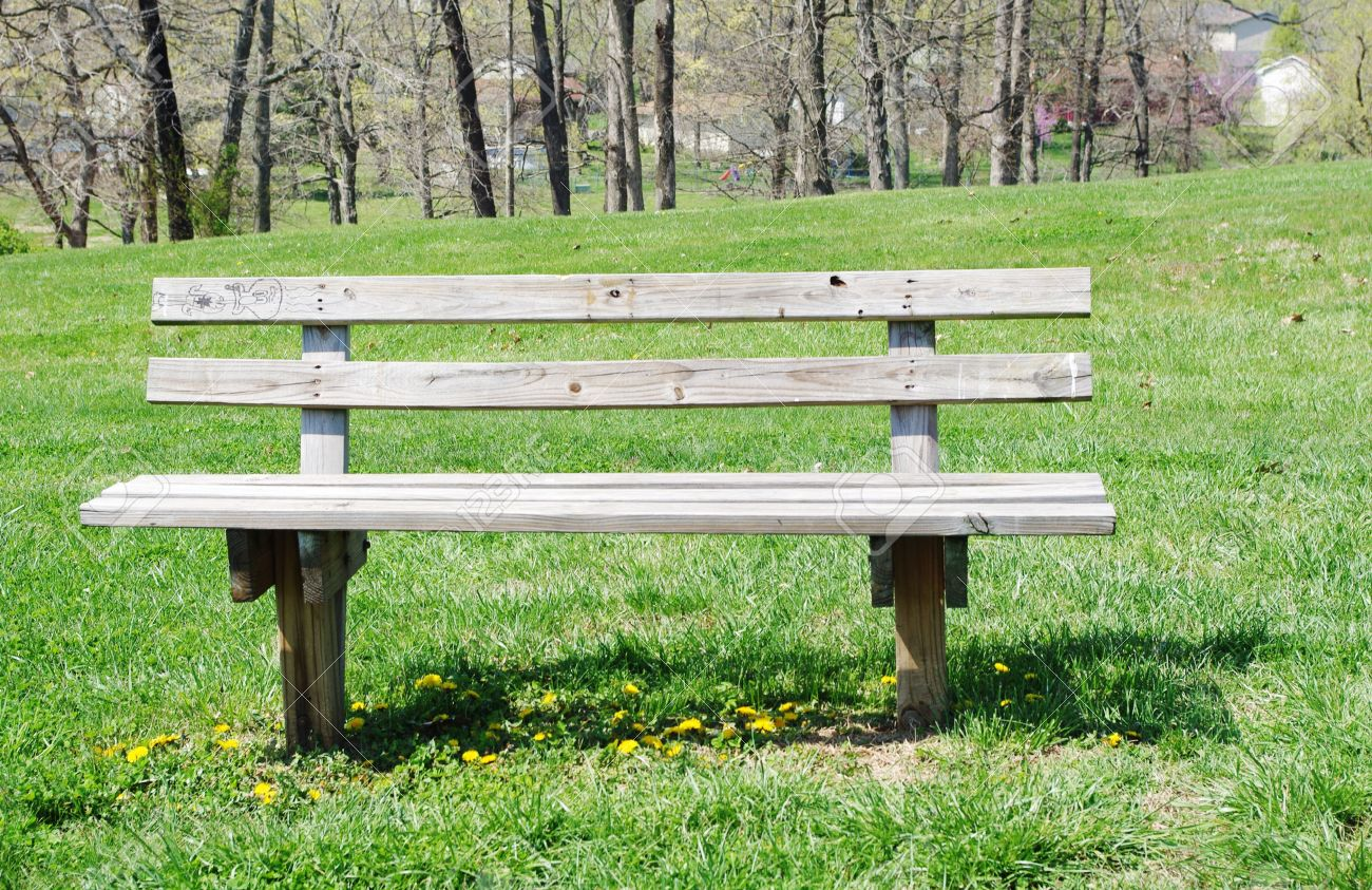 Old Wooden Park Bench In A Patch Of Dandelions Stock Photo Picture