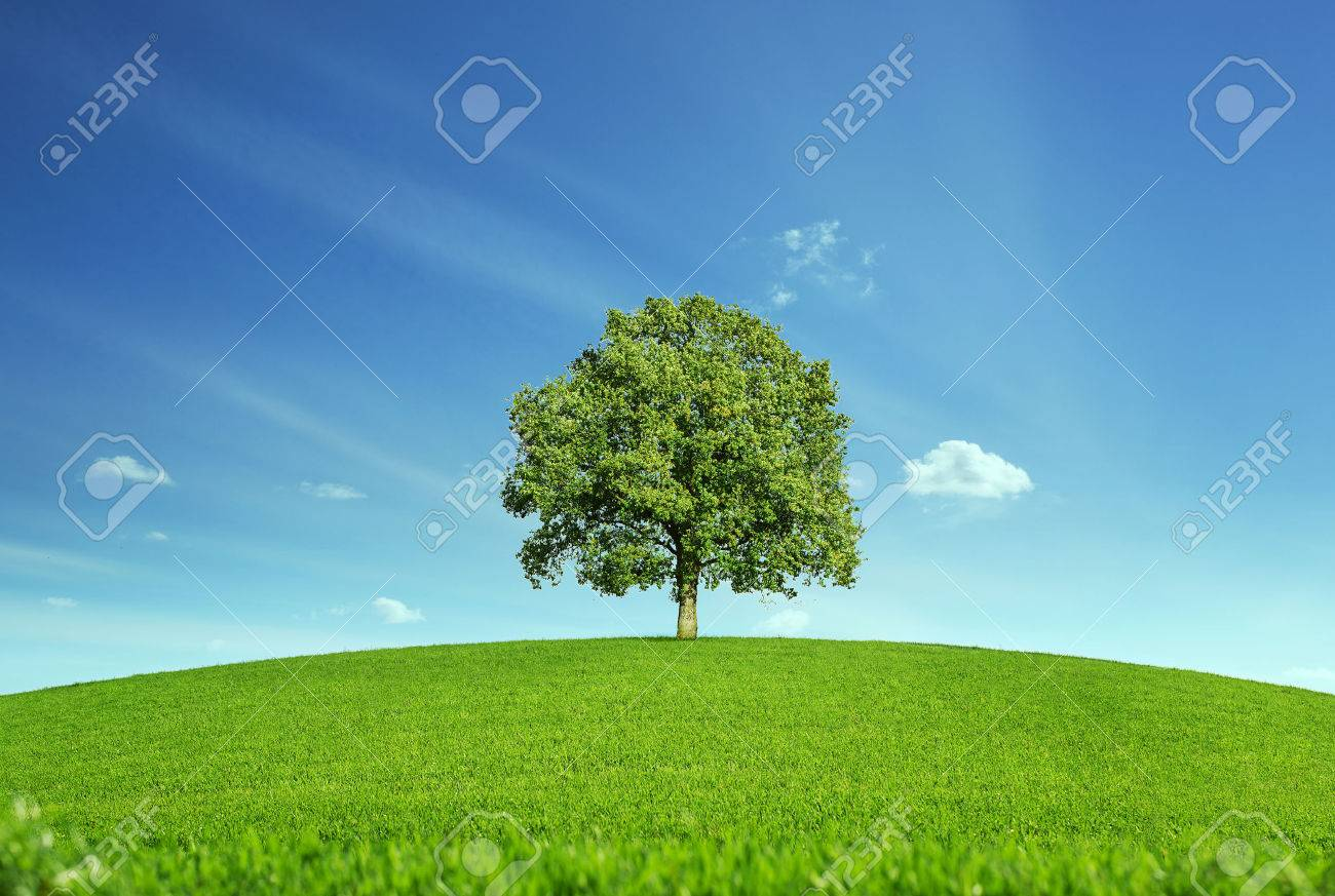 Lonely tree at the empty green field with copy space - 35504044