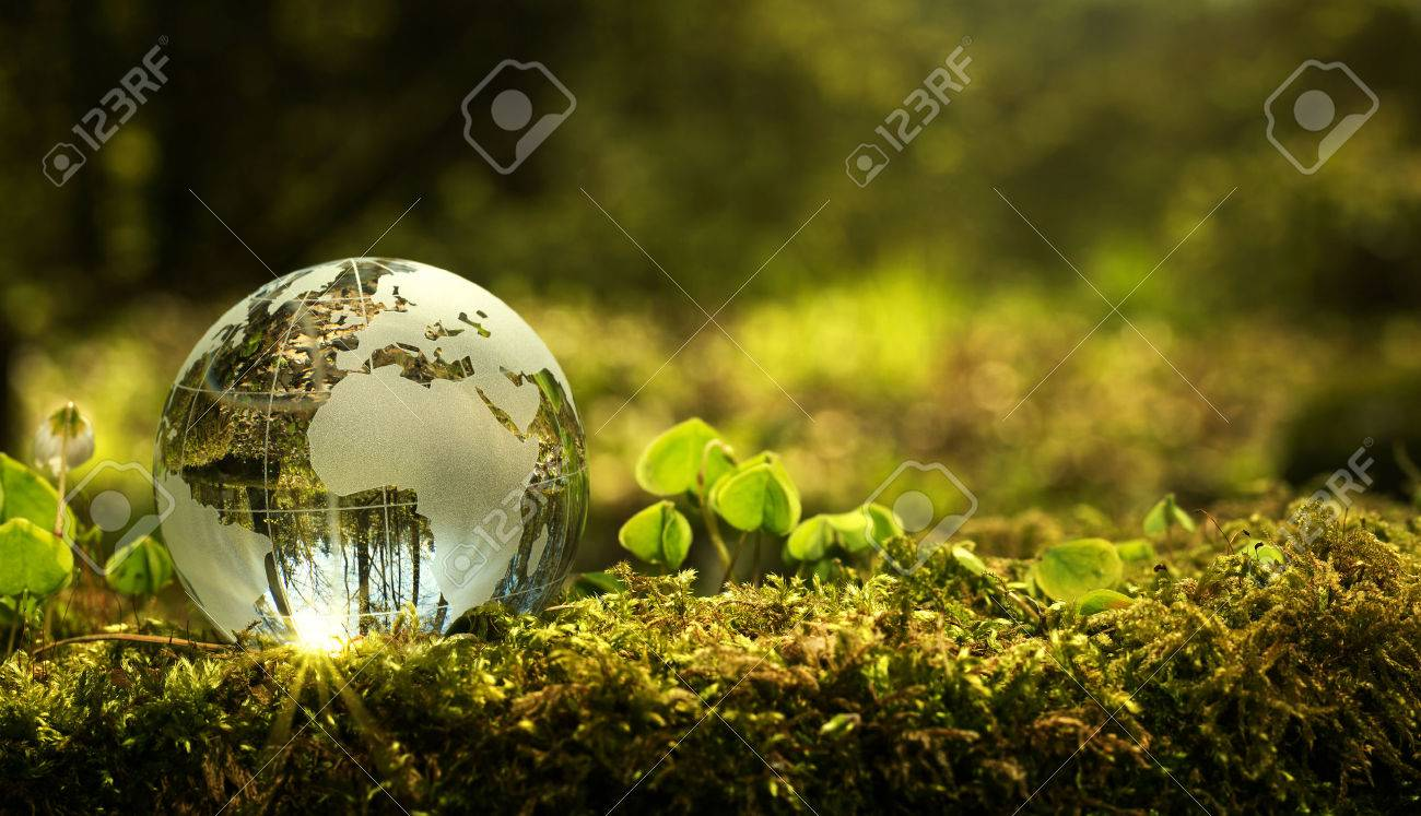 Environment conservation concept. Close up of glass globe in the forest with copy space - 77885064