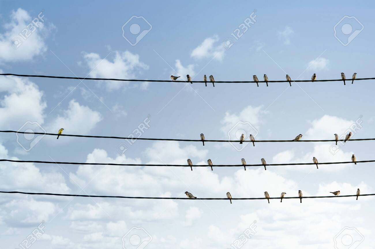 Individuality concept, one bird standing out from the crowd of other birds on the power line - 125678674