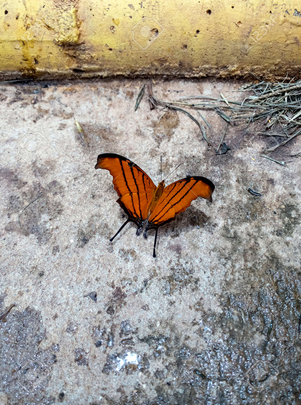Beauty butterfly resting on the ground. - 167513599