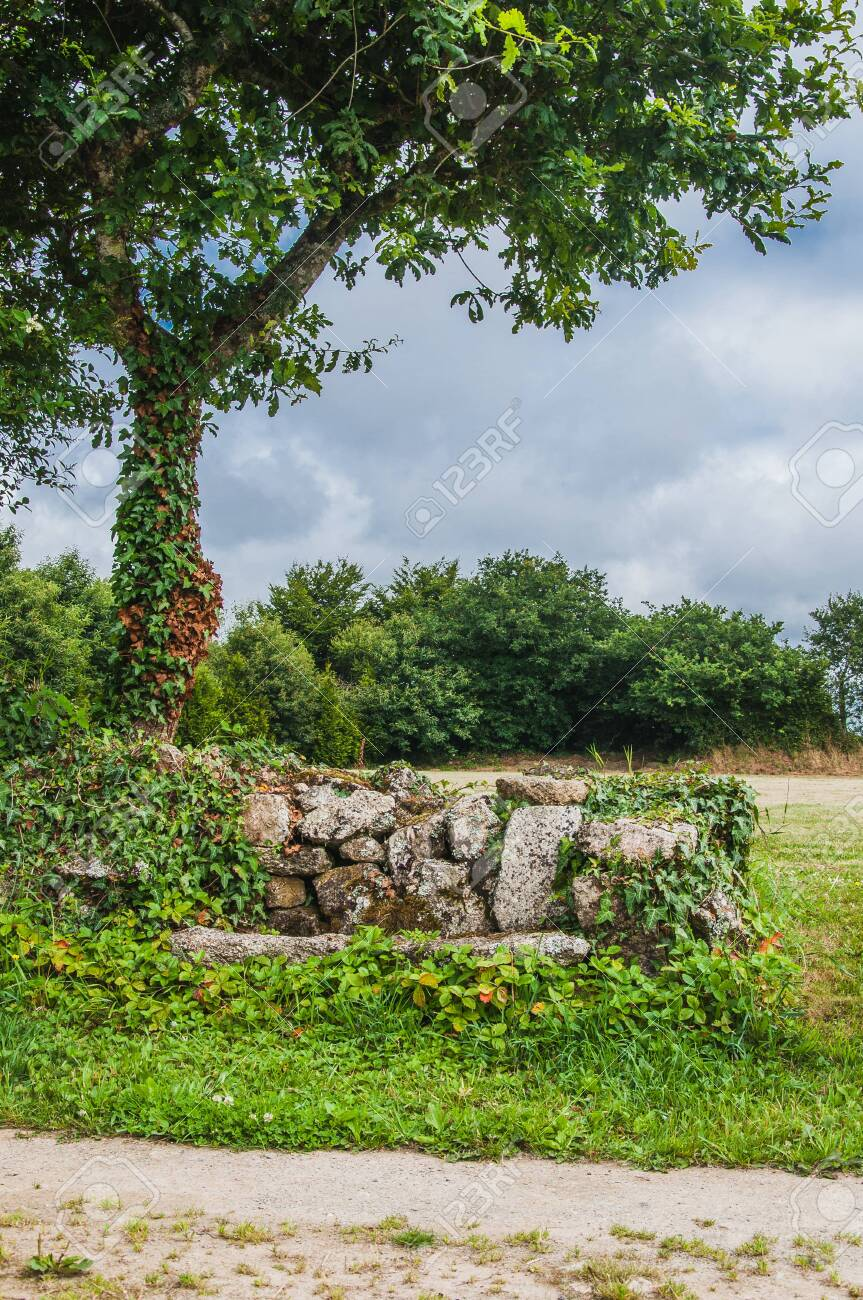 Stone Bench At The Foot Of A Tree In Finistere In France Under Stock Photo Picture And Royalty Free Image Image 121651991
