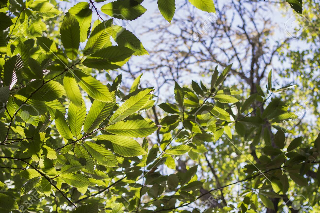 Leaves Of Shrubs And Plants In Spring Bathed By Sunlight Stock