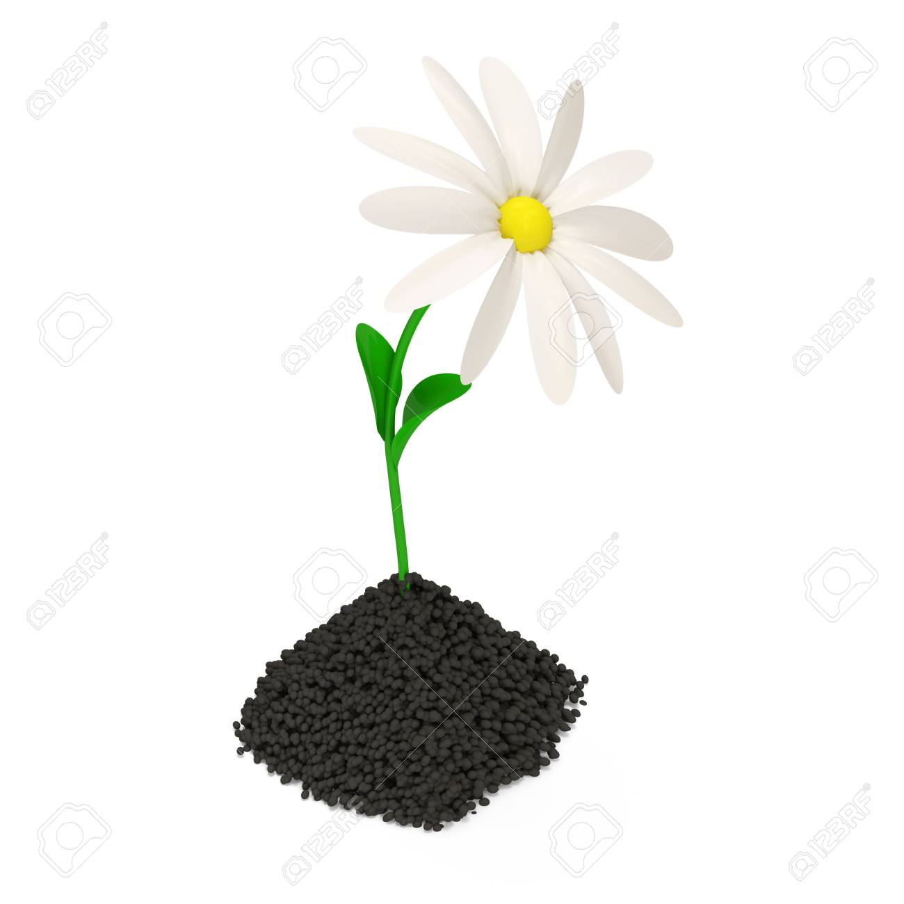Fresh Chamomile Growing in Soil Stock Photo - 22872087