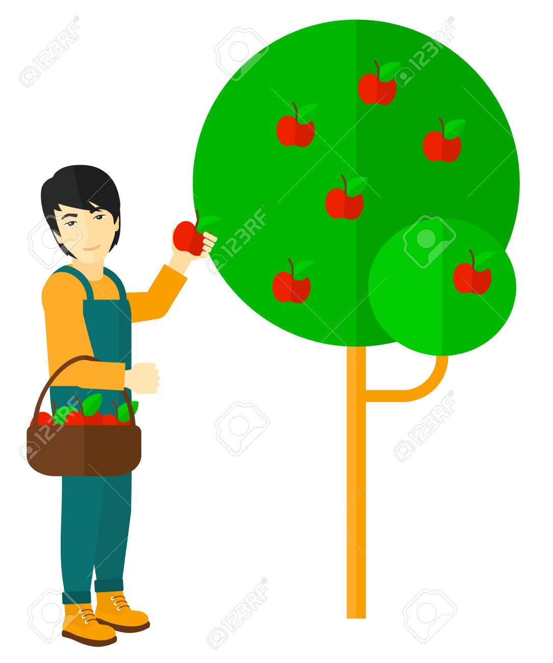 7ce036ad5061e Foto de archivo - Un granjero asiático que sostiene una cesta de manzanas y  la recolección de ilustración vectorial diseño plano aislado en el fondo  blanco.