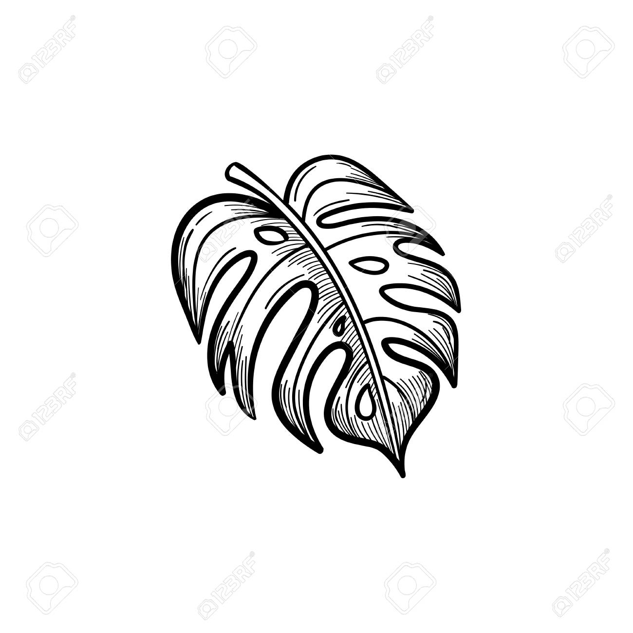 Vector Hand Drawn Palm Leaf Outline Doodle Icon Palm Leaf Sketch Royalty Free Cliparts Vectors And Stock Illustration Image 91363432 Vector palm beach tree leaves jungle botanical flowers. vector hand drawn palm leaf outline doodle icon palm leaf sketch