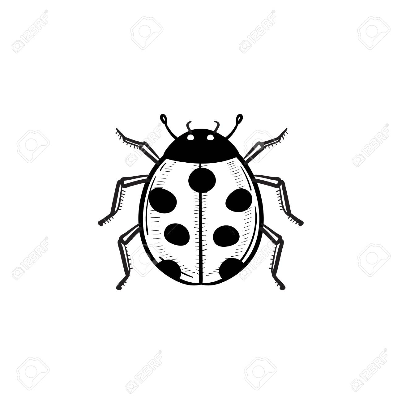 a vector hand drawn ladybug outline doodle icon. ladybug sketch.. royalty  free cliparts, vectors, and stock illustration. image 91375530.  123rf