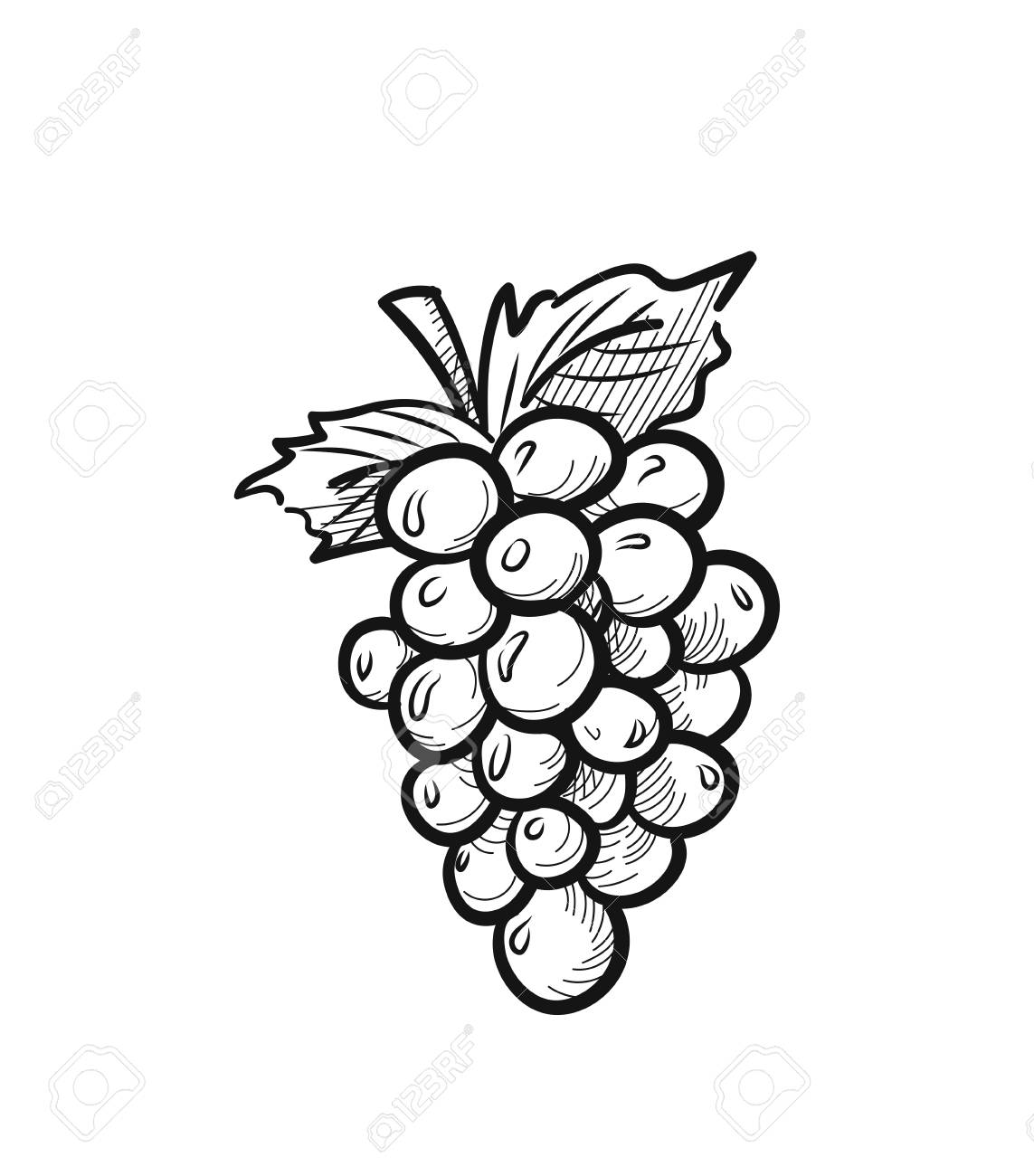Bunch of grapes with leaf sketch icon for web, mobile and infographics. Hand drawn bunch of grapes vector icon isolated on white background. - 95847519