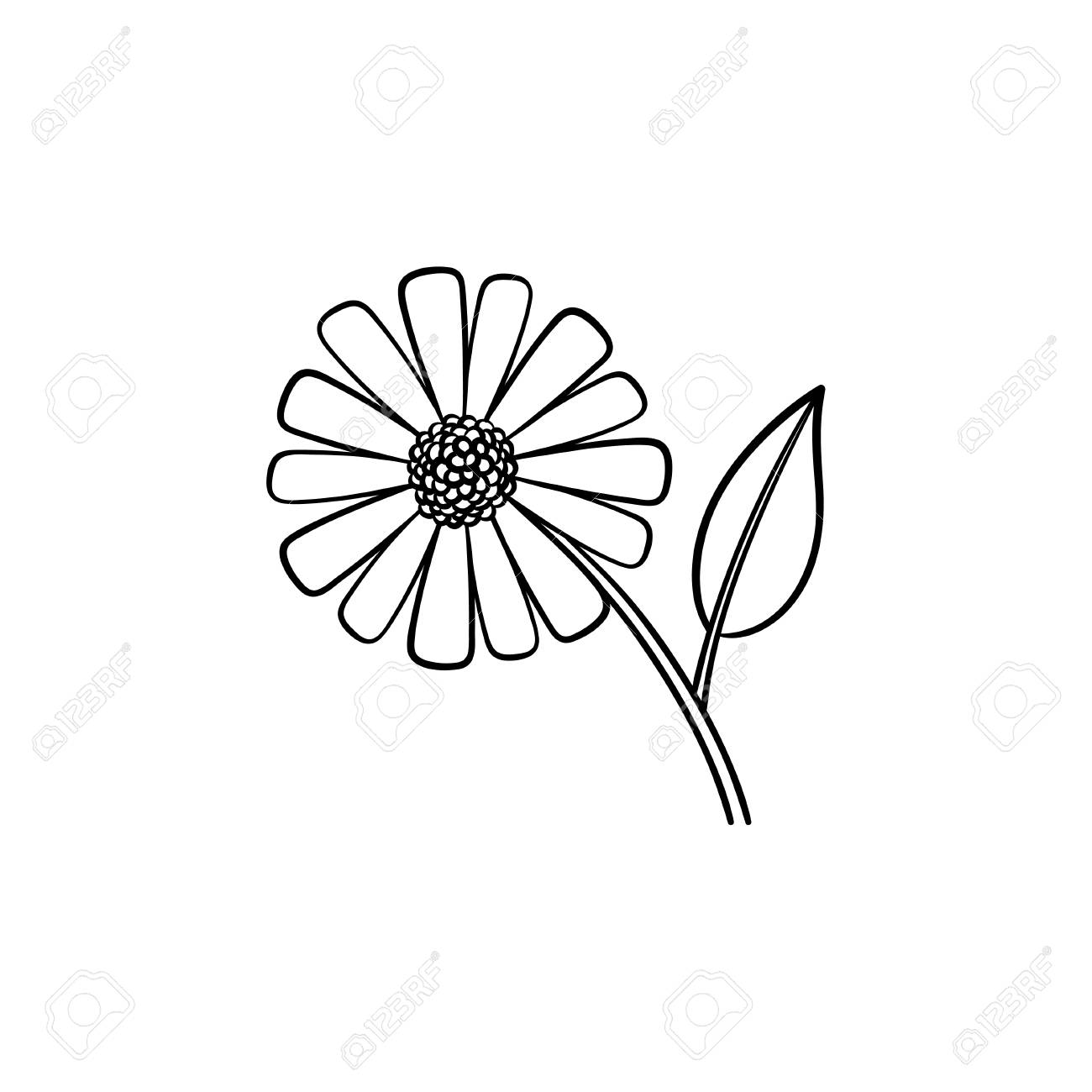 Daisy Flower Hand Drawn Outline Doodle Icon Field Daisy Flower