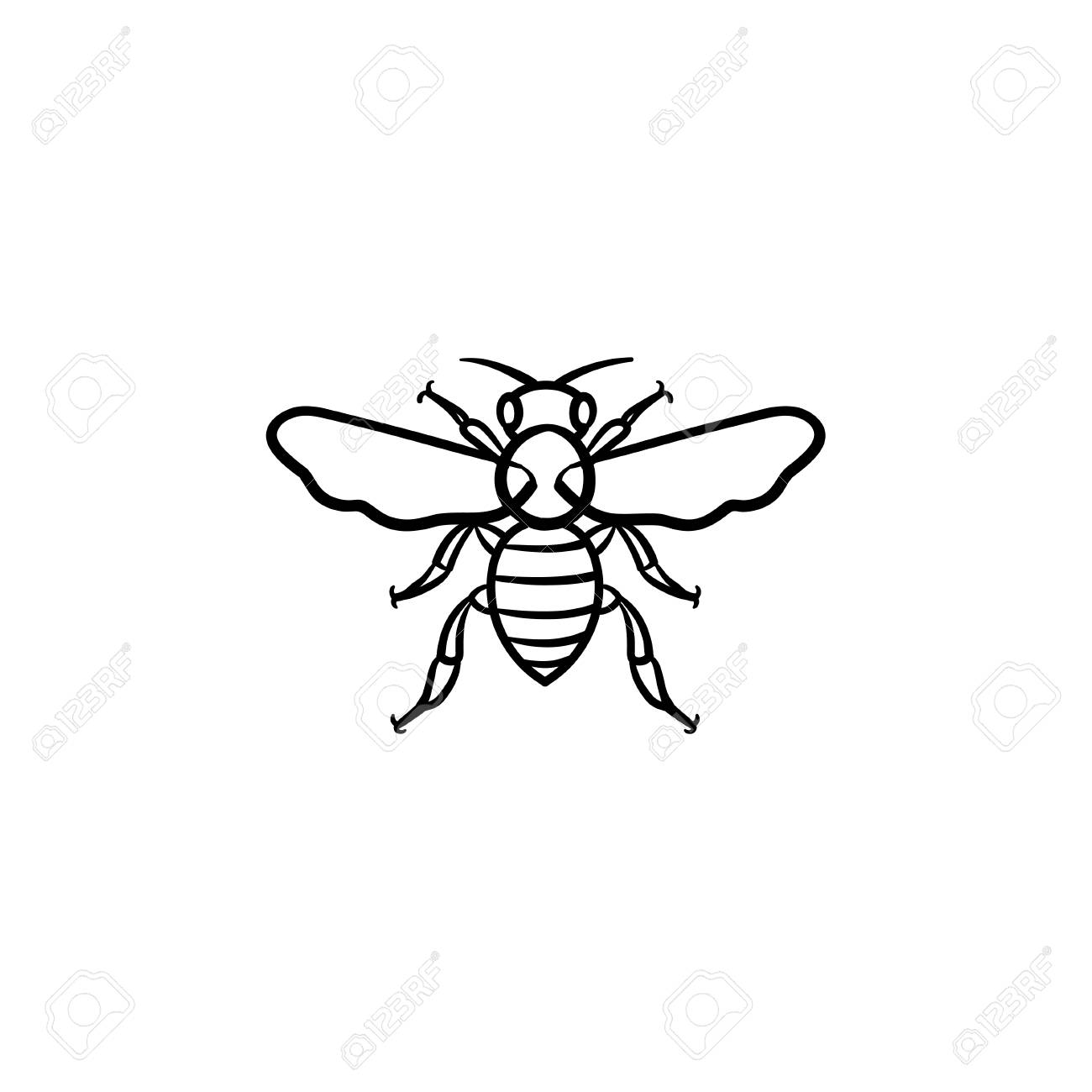 bee hand drawn outline doodle icon insect bee vector sketch