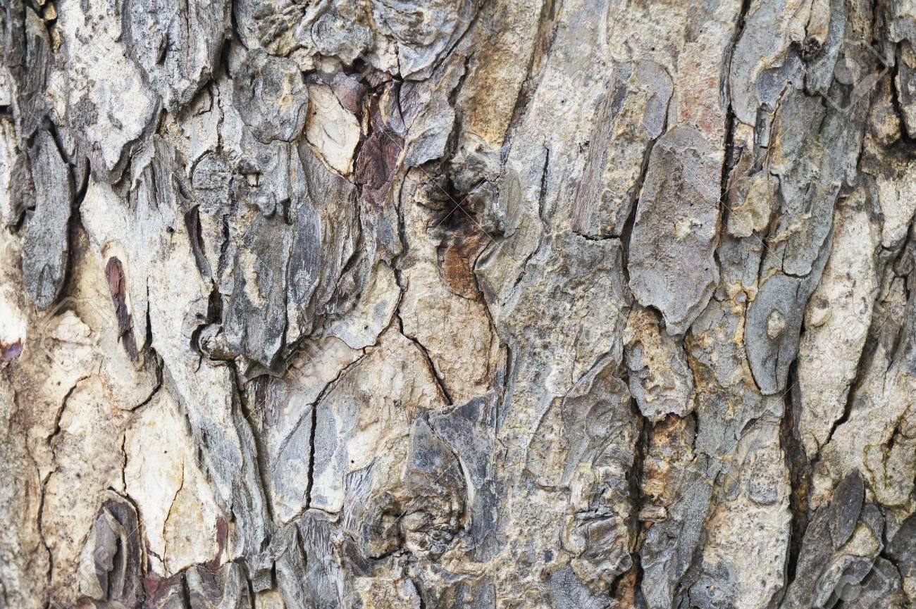 texture of a wood bark close up Stock Photo - 17395581