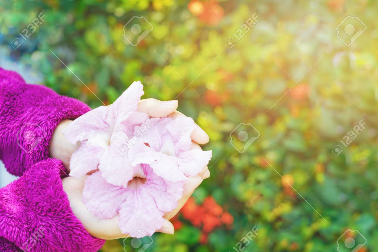 Little Girls Hands With Pink Trumpet Flowers And Blurred Background