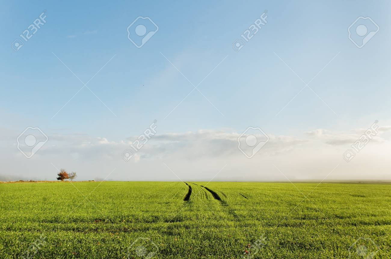 Track on the wheat field. Stock Photo - 11228764