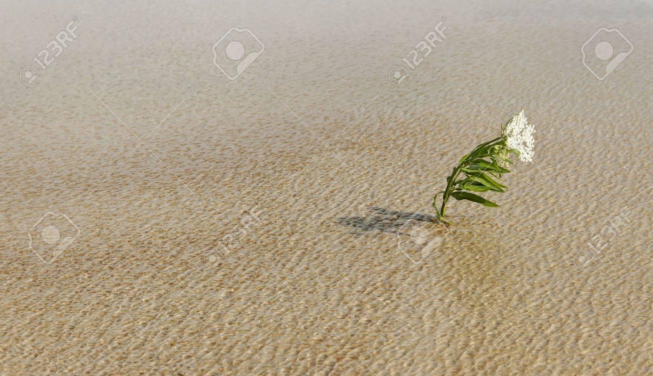 Alone flower survival on water in a wind. - 11641012