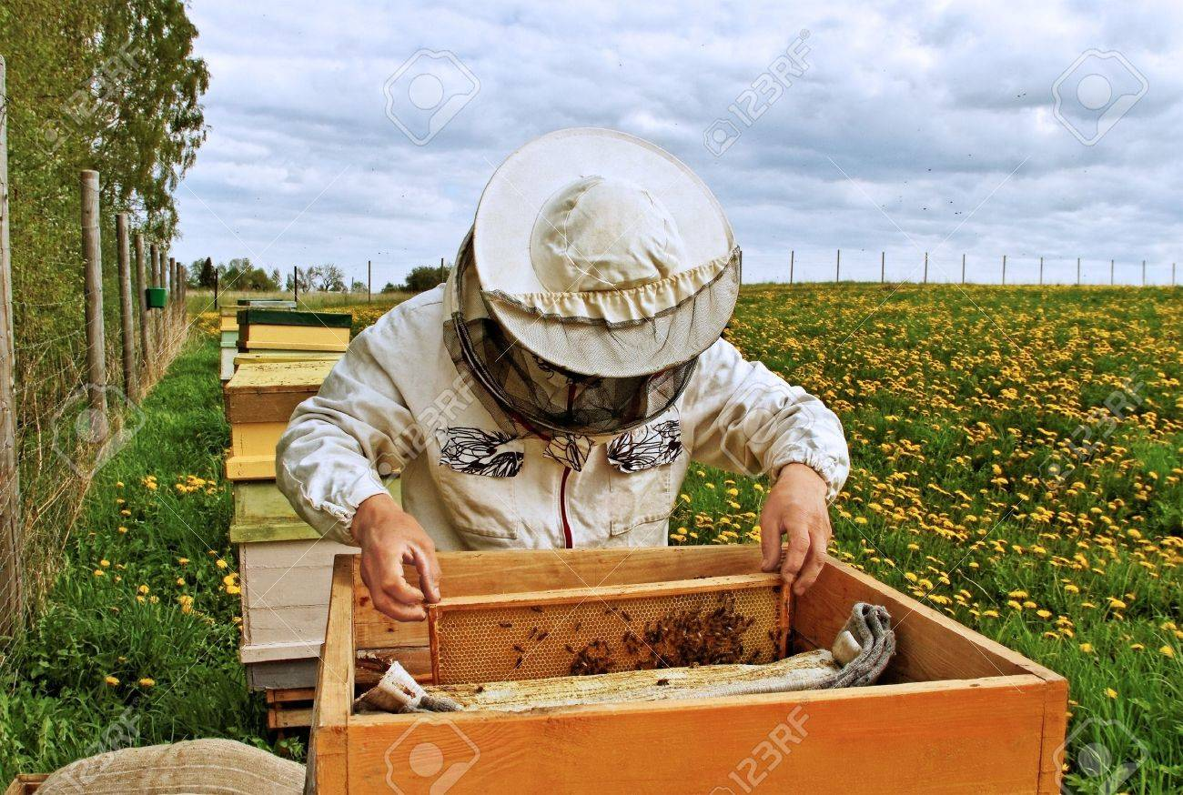 Apiarist is workind in his apiary. - 15002691
