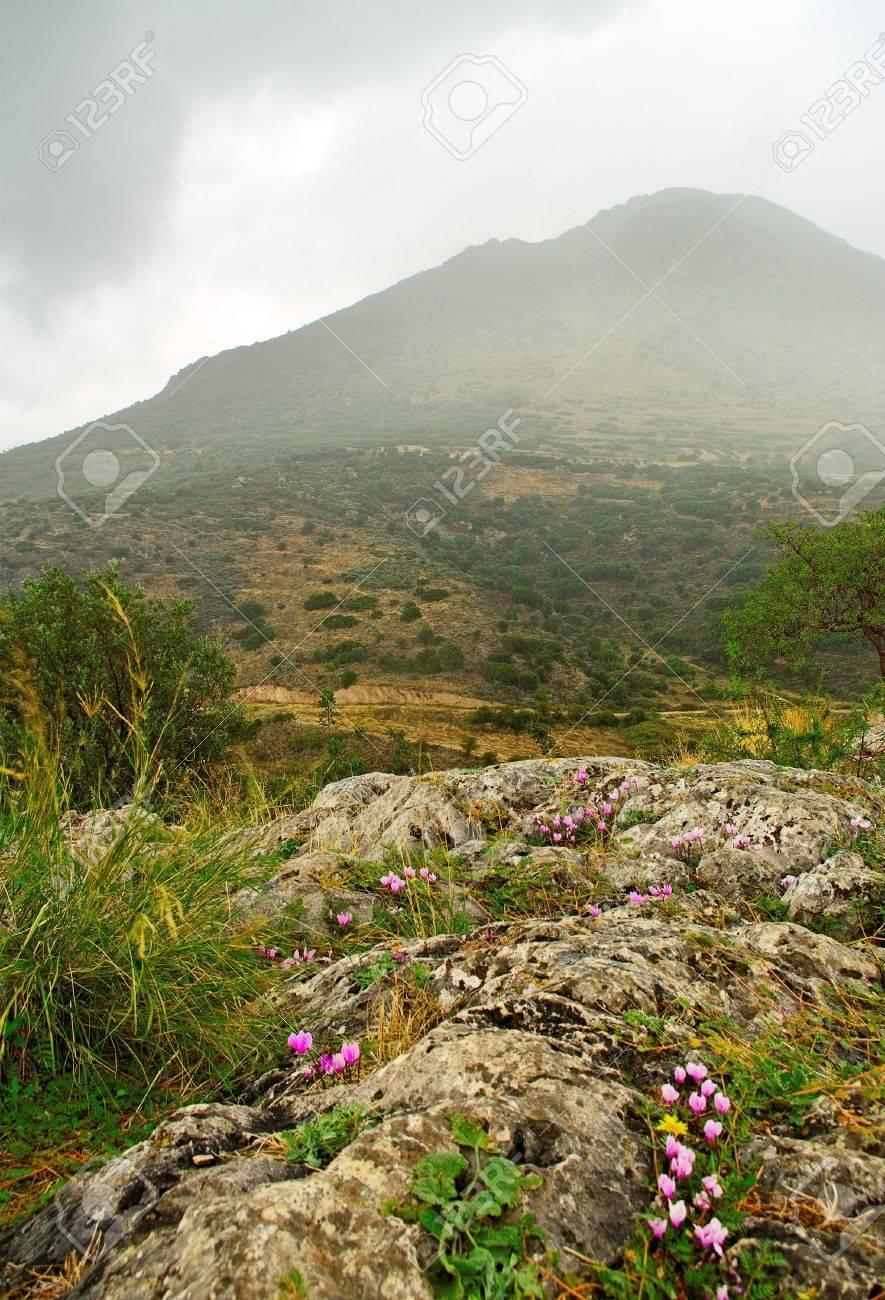 Delfi landscape with mountain flower Stock Photo - 16112253