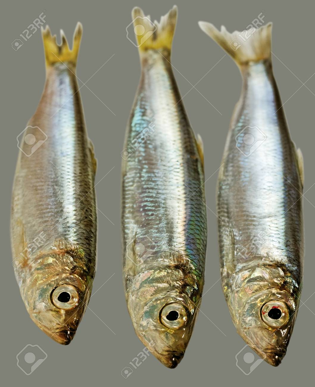 Three Baltic herrings isolated on grey surface Stock Photo - 16997338