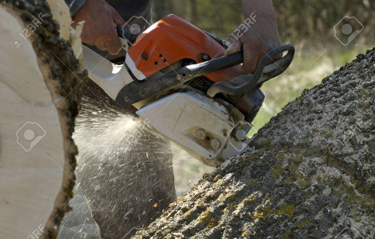Man cuts a fallen tree, dangerous work. - 28278870