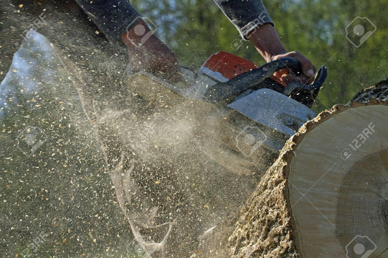 Man cuts a fallen tree, dangerous work. - 28278954