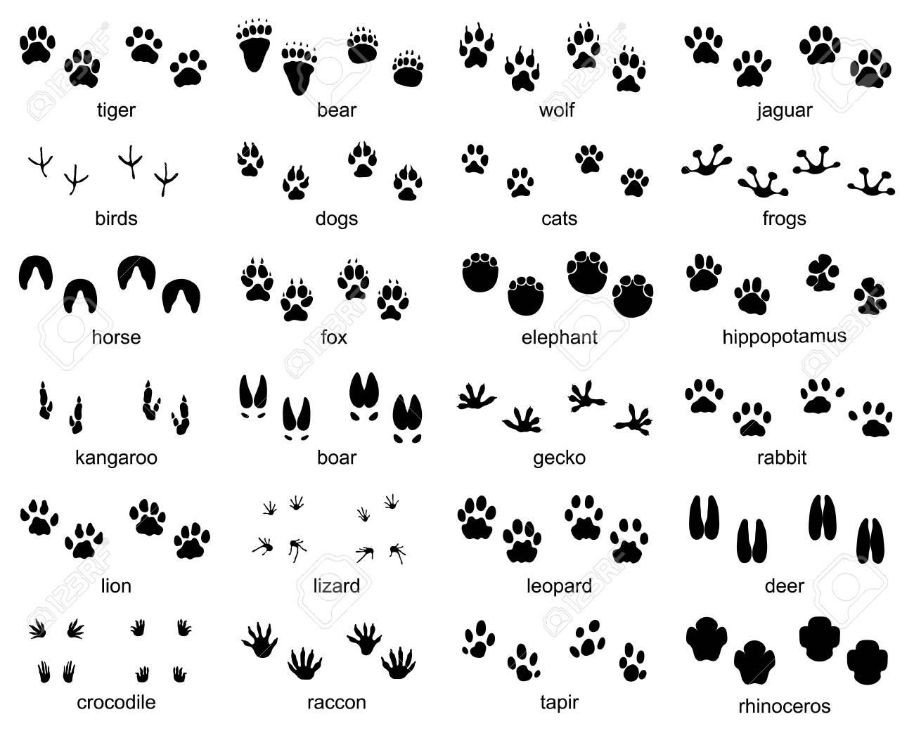 Set of footprints of wild animals, illustration of black silhouette - 112698102