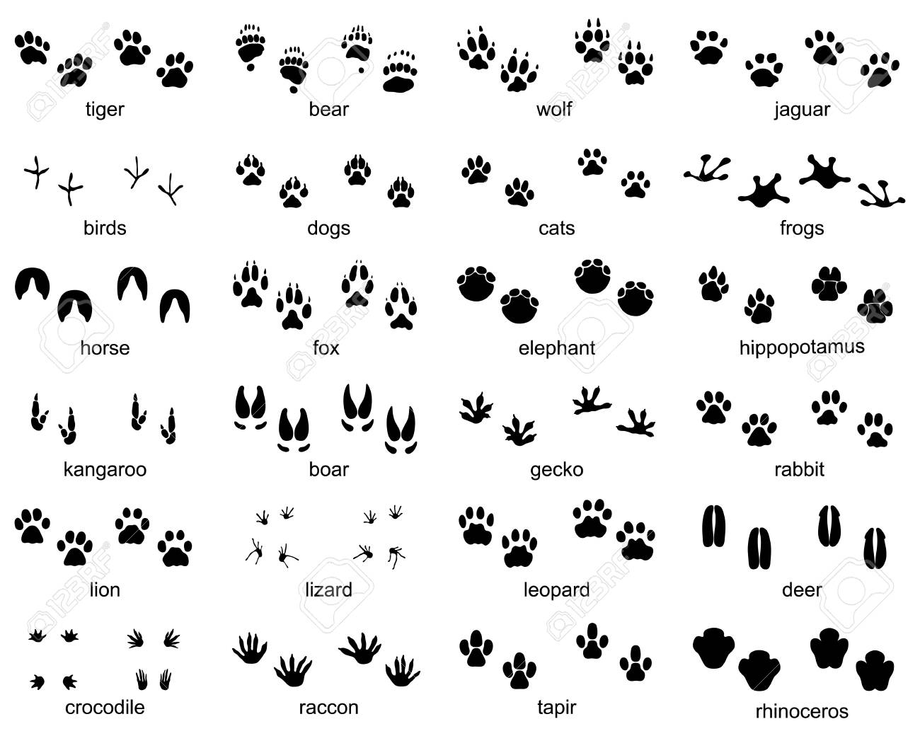 Set of footprints of wild animals on a white background - 121867513