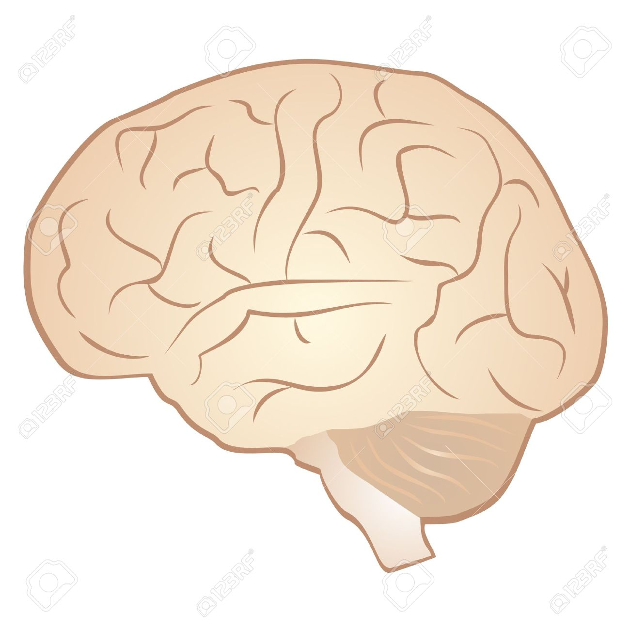 Drawing Of A Human Brain Royalty Free Cliparts Vectors And Stock