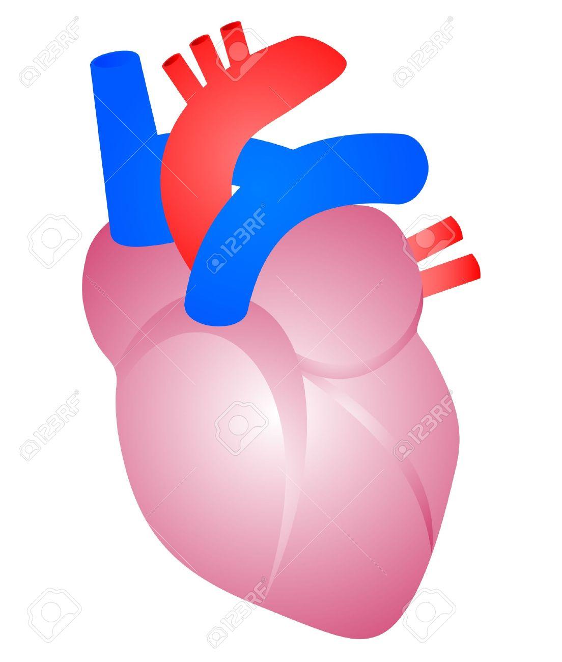 Dibujo De Un Corazón Humano Ilustraciones Vectoriales Clip Art