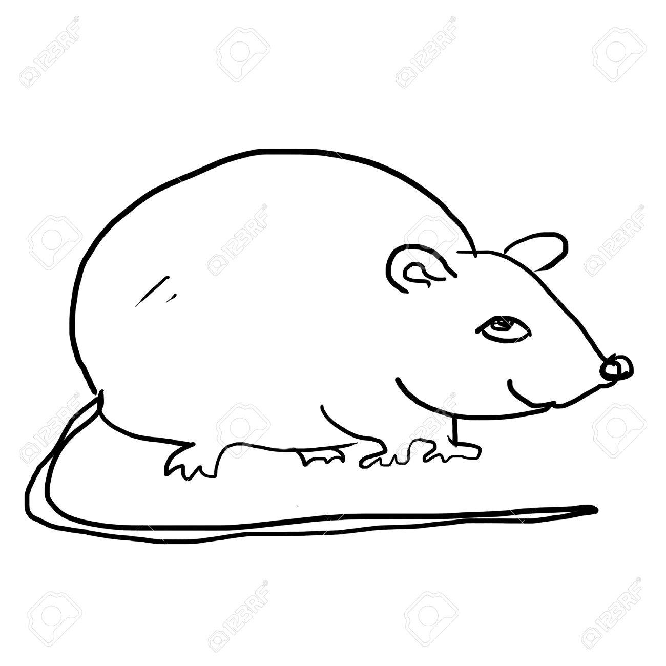 Uncategorized Drawing Of A Rat drawing of rat on the white stock photo picture and royalty free 12962872
