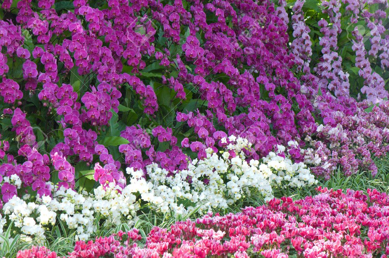 Colorful Flowers In The Garden At Flowers In Winter Festival Stock