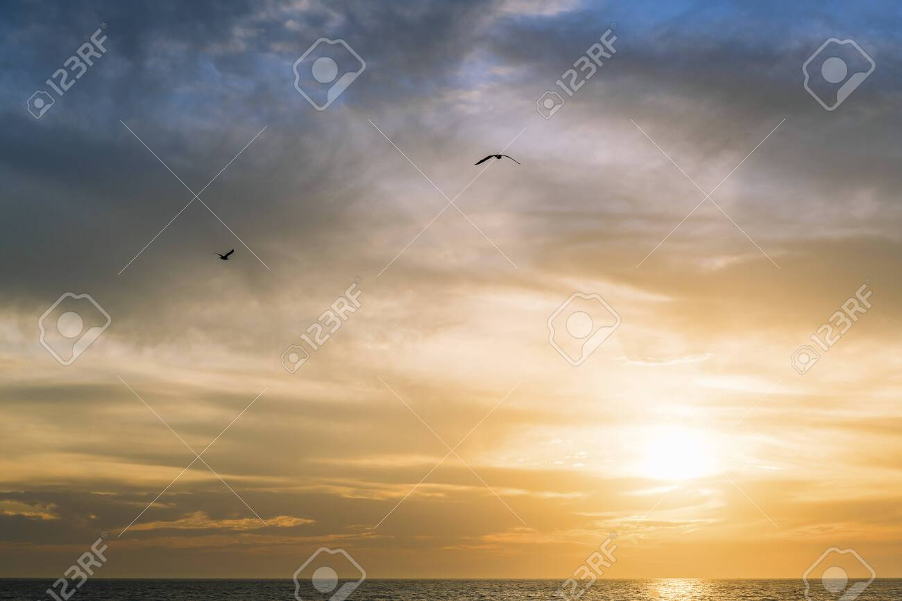 gulls flying over the sea across the spectacular cloudy sky at sunset, freedom concept, copy space for text - 146818586
