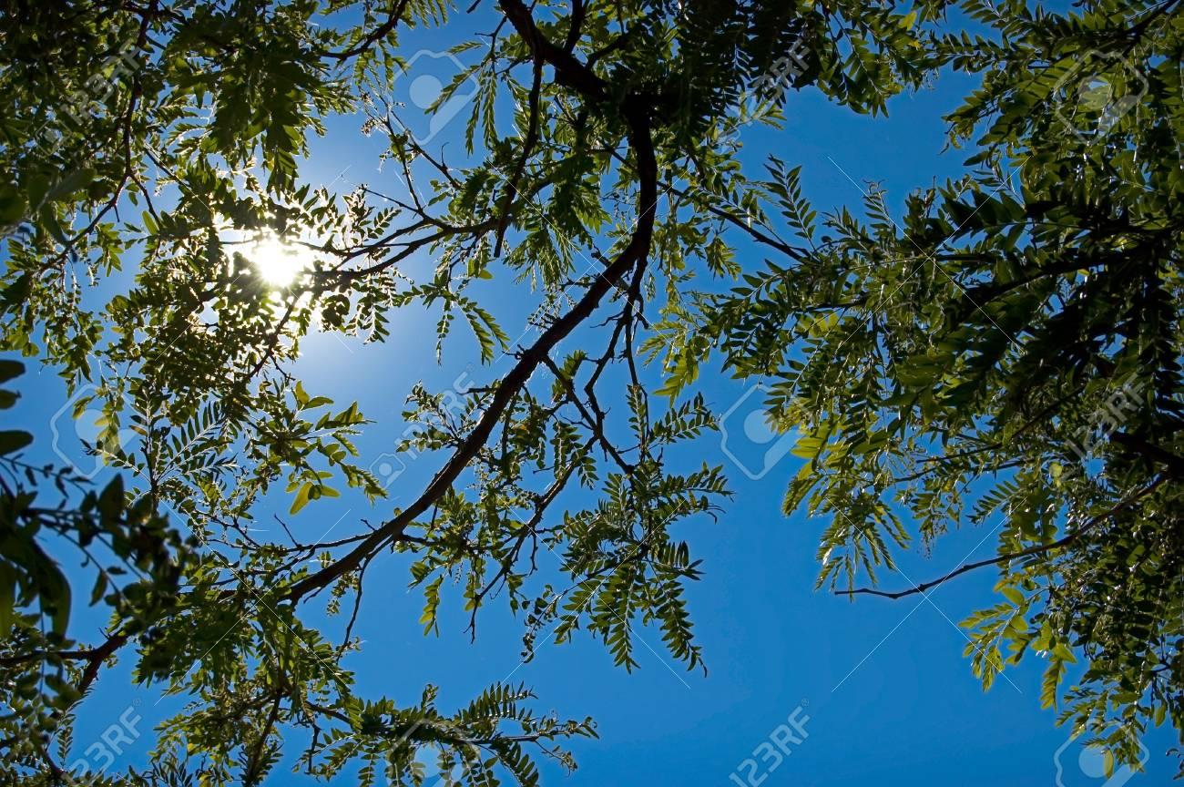 Leaves of a tree silouette a blue sky Stock Photo - 3674610