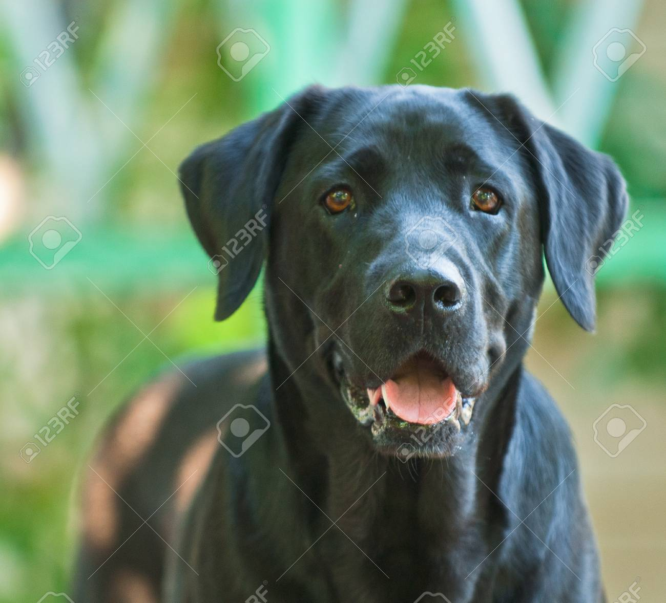 domestic animal on a beautiful background Stock Photo - 12587537