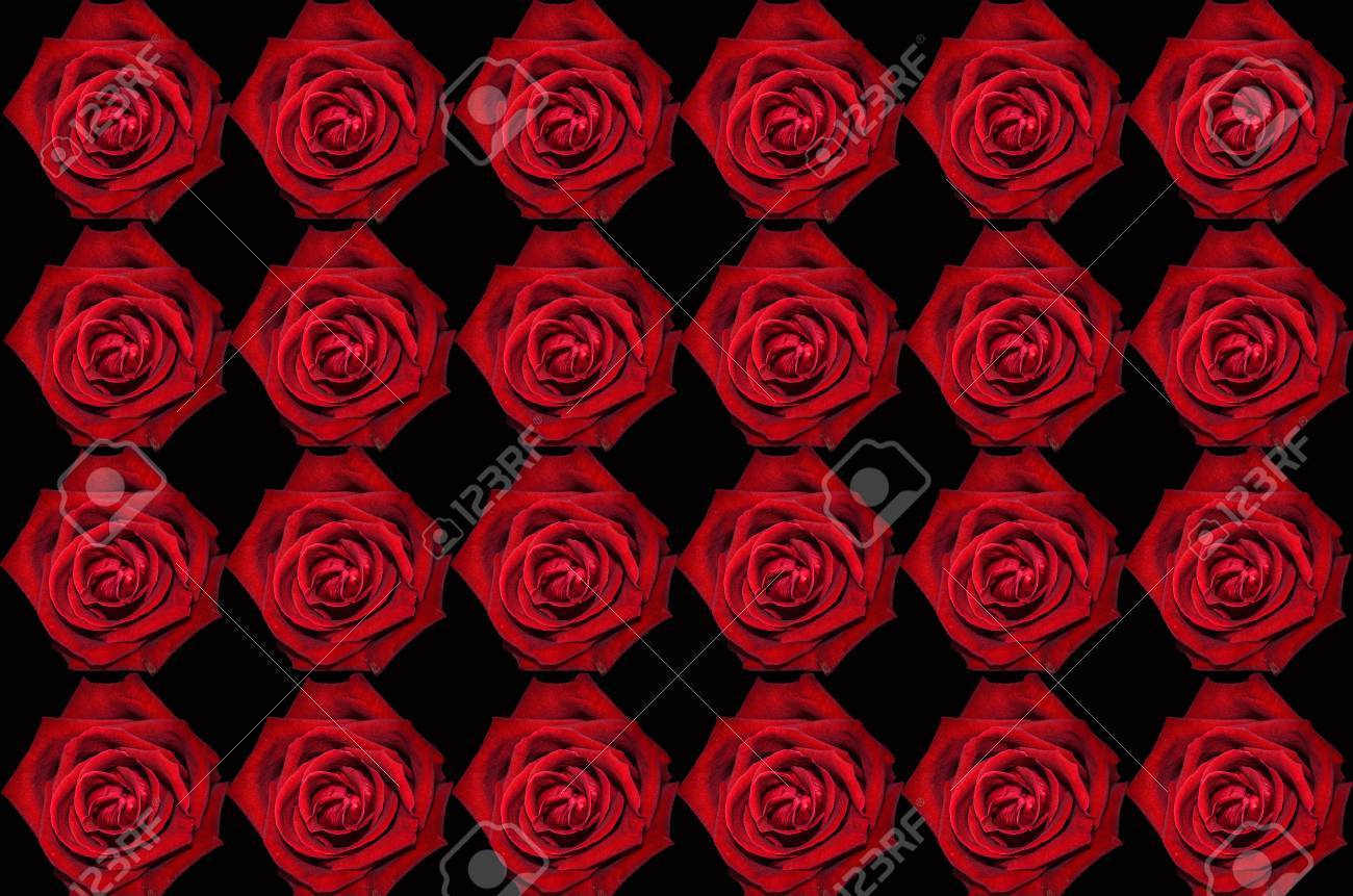 Red Rose On Black Background Wallpaper Stock Photo