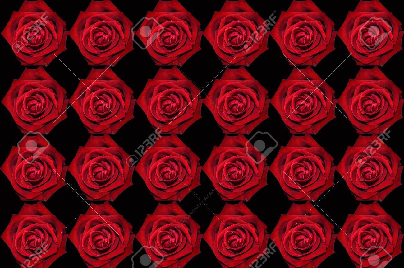 Rose Rouge Sur Fond D Ecran Noir