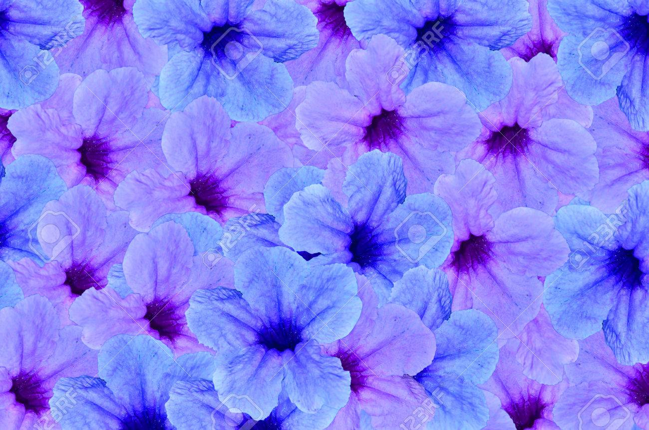 Blue Violet Color Beautiful Flower Background Stock Photo Picture