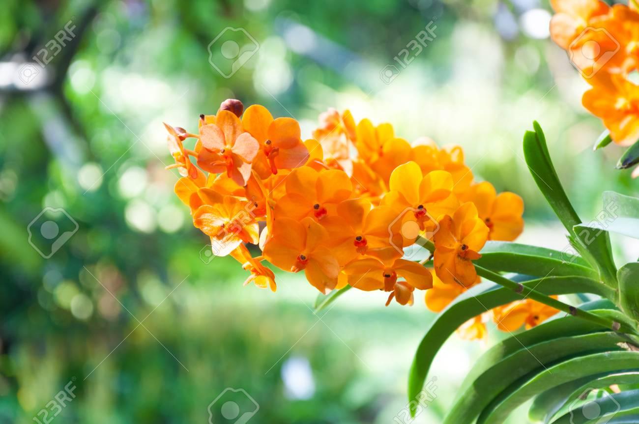 Il mazzo del fiore arancio delle orchidee si chiude su nell ambito