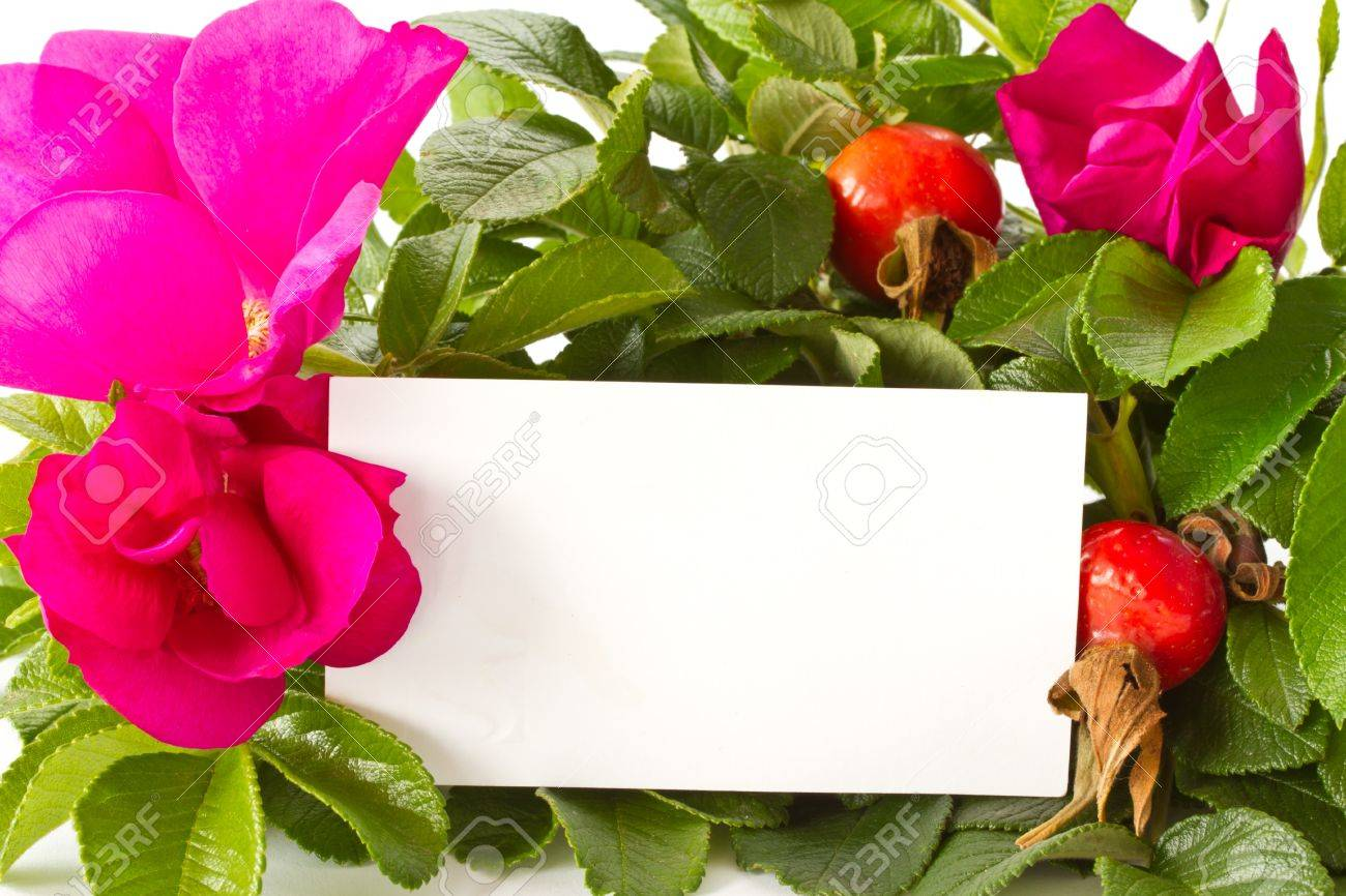 Ripe Fruit And Beautiful Flowers Wild Rose On A White Background