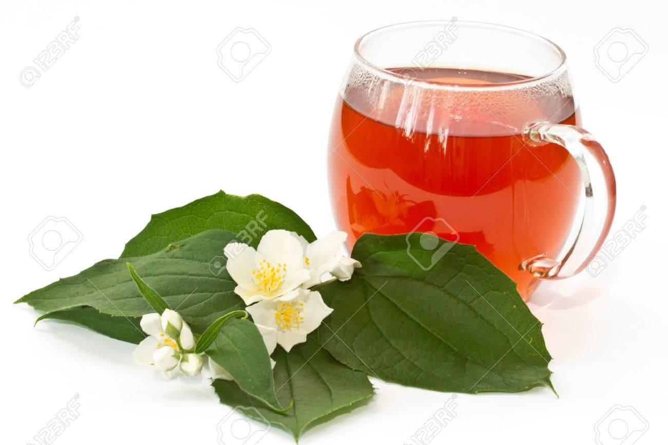 jasmine tea and jasmine flowers on a white background Stock Photo - 11068058