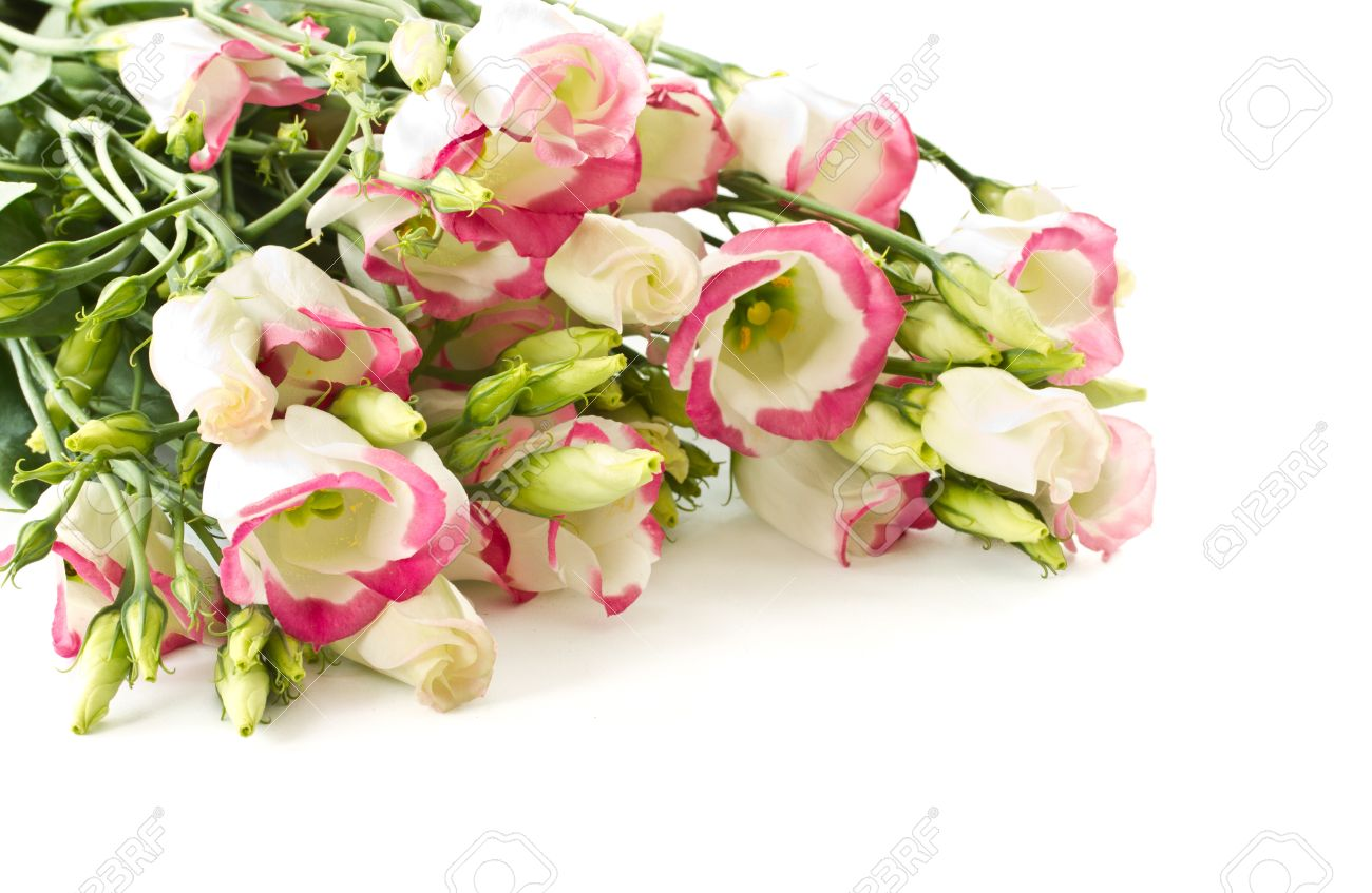 Bouquet of pink lisianthus flowers on a white background stock photo bouquet of pink lisianthus flowers on a white background stock photo 13075076 mightylinksfo