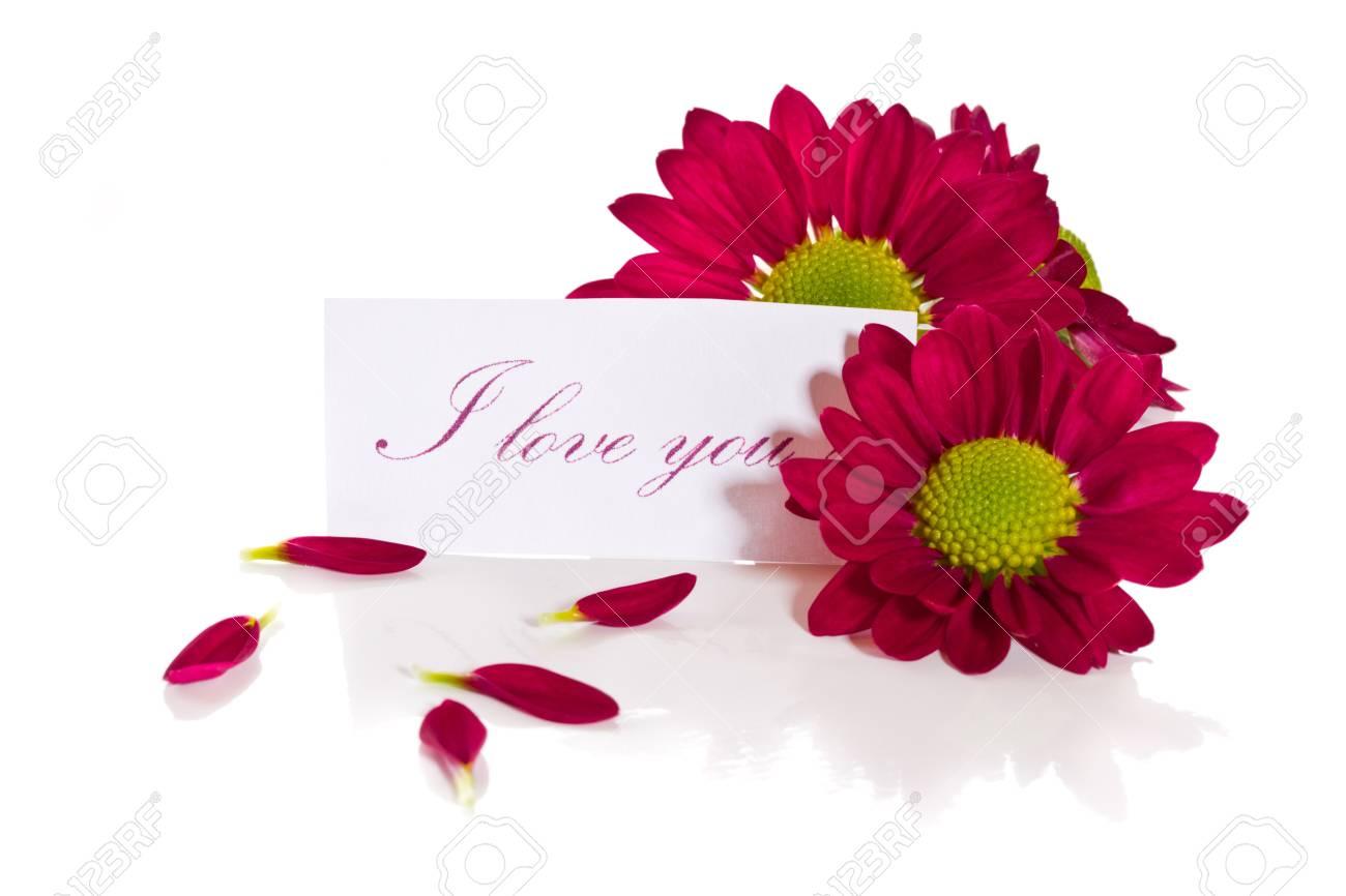Beautiful purple chrysanthemum with a declaration of love Stock Photo - 18078705