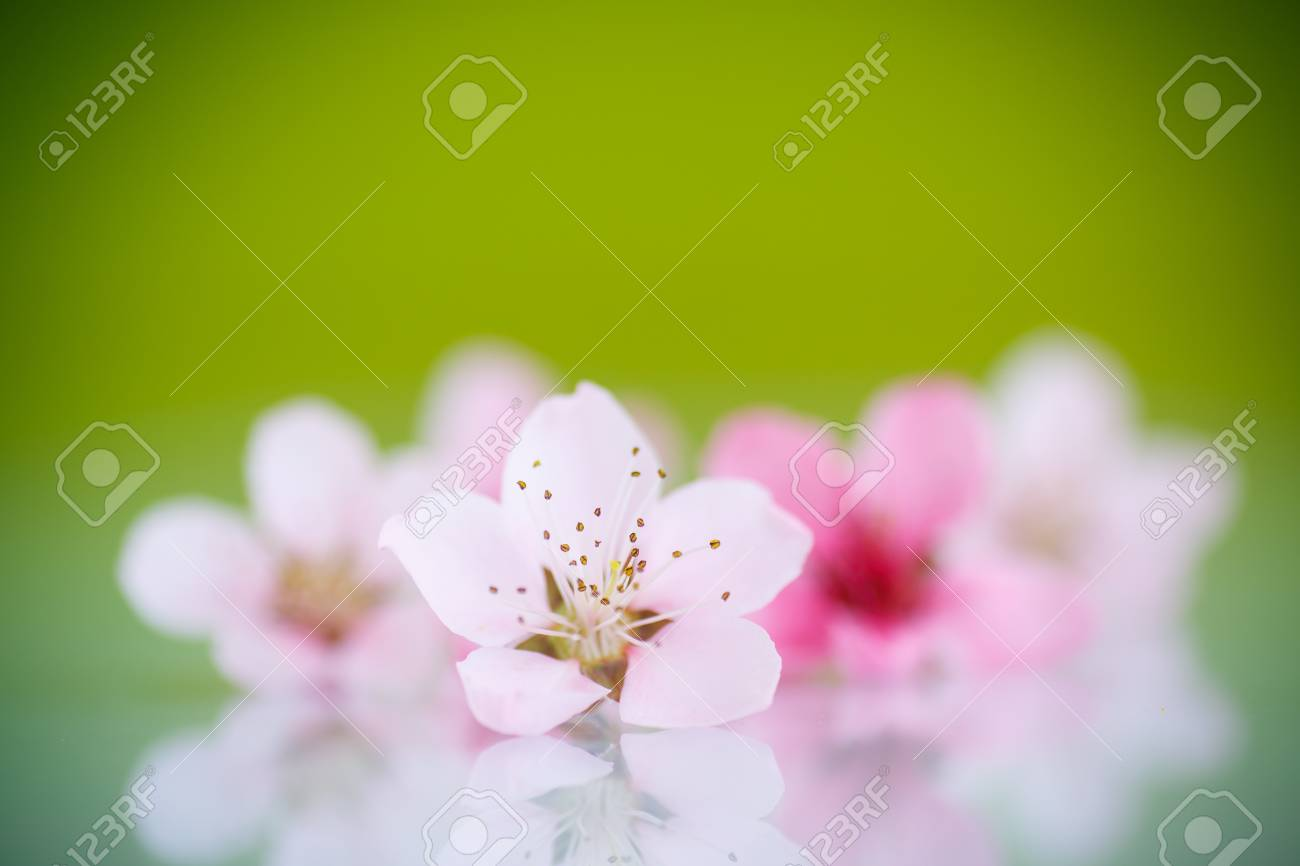 Peach Pink Flowers On A Green Background Stock Photo Picture And